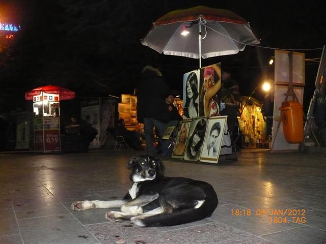 aua549ukrexshkunstundhund